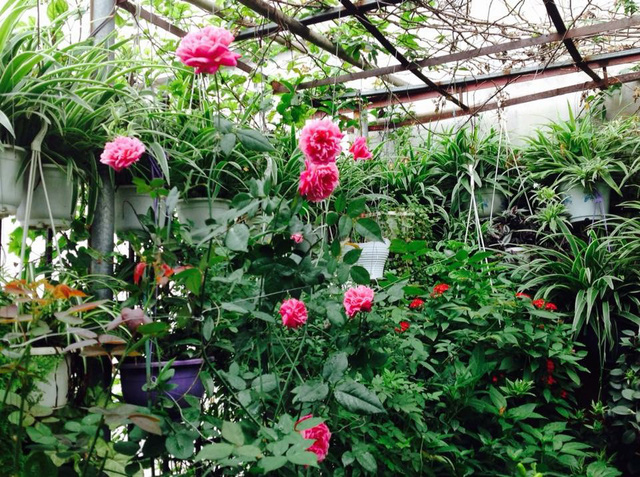 Tại đây, cô trồng đủ loại hoa, quanh năm đua nhau khoe sắc