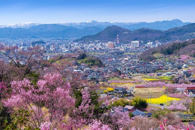 Cảnh sắc rực rỡ của công viên Hanamiyama (Nhật Bản) vào mùa Xuân