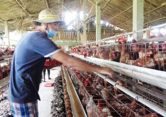 Anh Phạm Phú Thứ chăn nuôi đàn gà đẻ 7.000 con, mỗi tháng lãi 20 triệu đồng.