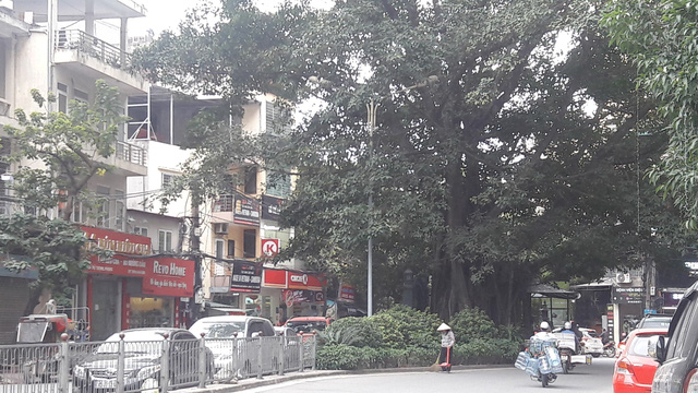 Cây đa khổng lồ và ngôi miếu nằm giữa dải phân cách đường Vũ Trọng Phụng