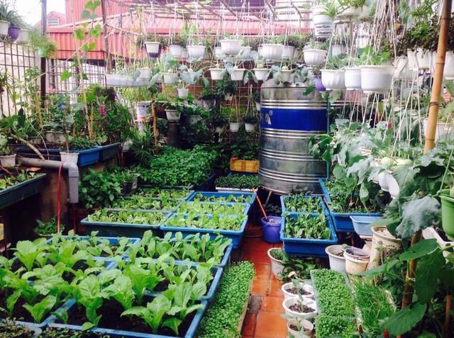 Bên cạnh đó, cô Nga còn trồng rau sạch trên sân thượng mấy chục mét vuông để lấy rau xanh cho gia đình ăn