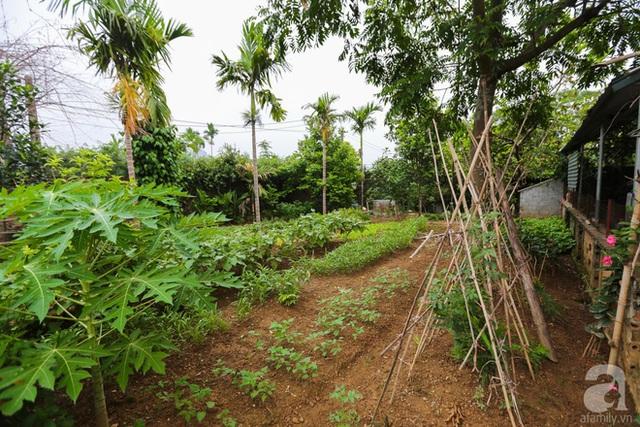 Góc vườn trồng rau.