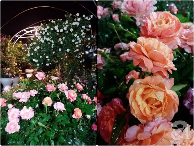 Vườn hồng lung linh buổi tối.