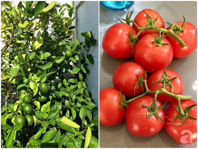 Một góc trồng cây ăn quả và rau sạch.