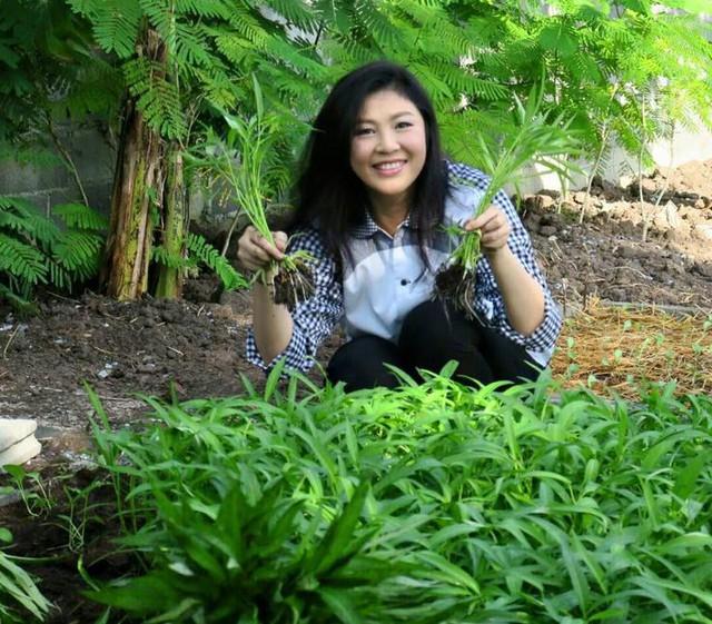 Trên trang cá nhân Facebook, bà Yingluck Shinawatra cũng thường xuyên khoe ảnh đi chăm sóc rau và nhận được nhiều lượt thích của cư dân mạng.