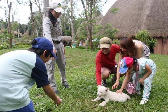 Khách thăm quan thích thú với chú sư tử trắng tại Vinpearl Safari Phú Quốc