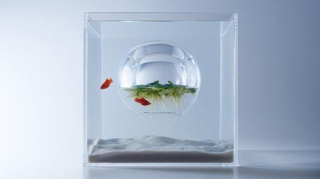 Với mẫu bể cá này tạo cảm giác không gian ngược cho người xem, biến môi trường sống của các chú cá trở nên đặc biệt.
