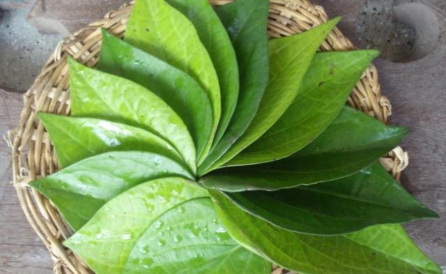 Ngoài tỏi, sữa chua thì trầu không, trà xanh cũng là một trong những vị thuốc chữa viêm âm đạo được nhiều chị em kháo nhau sử dụng.