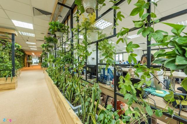 Các loại cây được trồng rất đa dạng như vạn niên thanh, chanh leo, thậm chí là mồng tơi, ớt, tía tô... Văn phòng tạo cho người làm việc cảm thấy như một khu vườn gần gũi.