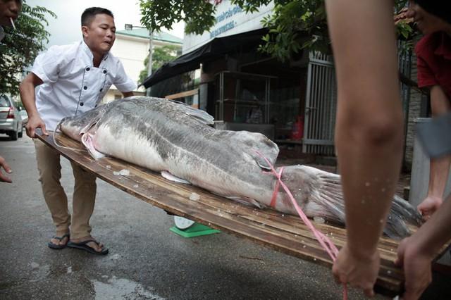 Tổng giá trị của cặp cá lăng lên tới 300 triệu đồng.