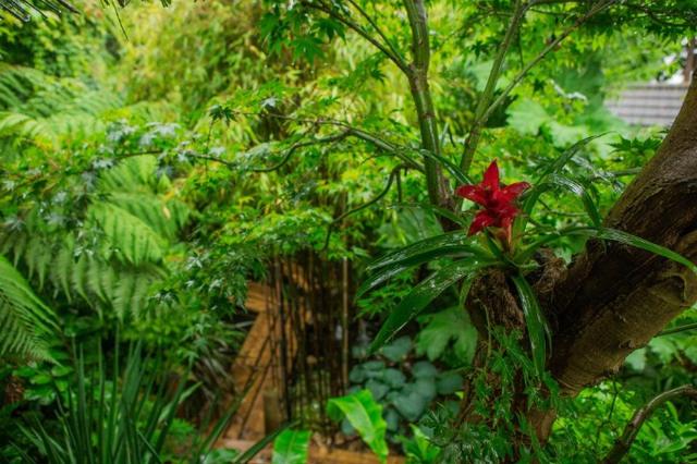 Khi còn là một đứa trẻ, mỗi lần được đi nghỉ cùng gia đình tới các vùng rừng, Nick đã mê mẩn các loại cây xanh và cảnh quan rừng núi. Vì vậy, ông nung nấu ý định sẽ đem cả khu rừng nhiệt đới vào ngôi nhà của mình.