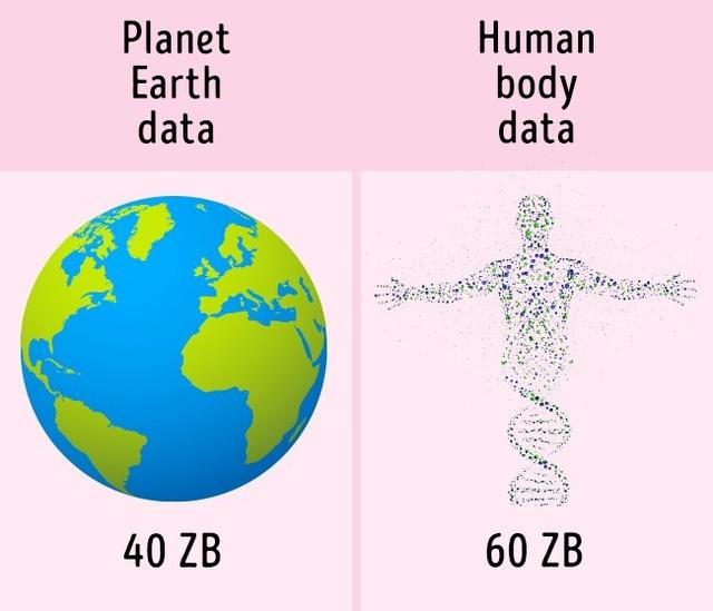 Lượng thông tin lưu trữ trong bộ ADN của cơ thể người nhiều gấp rưỡi tổng số thông tin và kiến thức của thế giới.