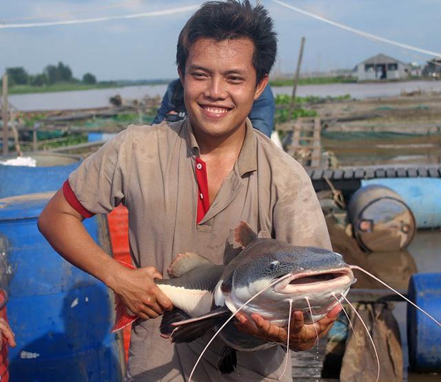 """""""Ban đầu thấy nó đẹp nên mua về đem thả vào bè nuôi chơi. Qua nhiều năm, cá Hồng Vỹ này lớn rất nhanh. Trước đây tôi có thử bắt một con để làm thịt ăn thì thấy rất ngon. Hôm trước có người đến năn nỉ mua mỗi ký cá này lại với giá 3 triệu đồng nhưng tôi không bán. Nếu bán hết đám cá Hồng Vỹ này tôi cũng thu cả tỉ đồng"""", ông Bon nói và cho biết, dù ai có trả giá bao nhiêu cũng không bán vì đây là loại cá quý hiếm."""