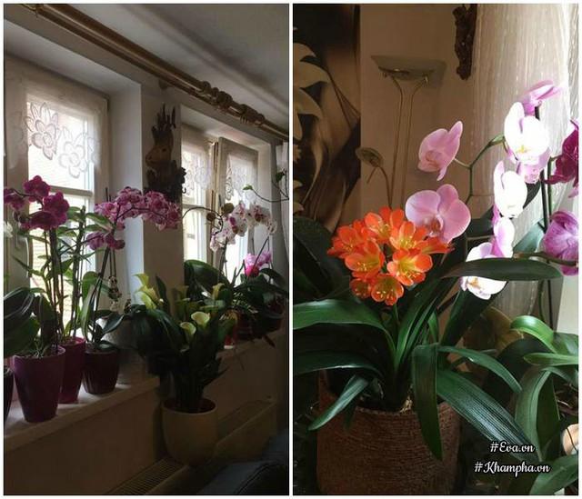 Các chậu hoa lan được chị đặt trên bậu cửa sổ.