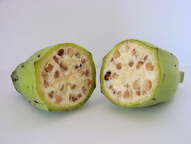 Musa acuminata là tổ tiên của loài chuối vào khoảng 8.000 năm trước công nguyên.
