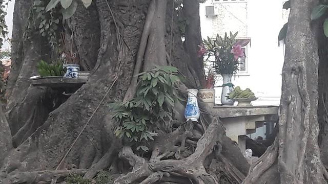 Dưới gốc đa trên đường Võ Chí Công, người dân lập nhiều bàn thờ để hương khói