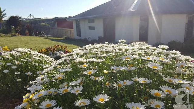 Ngôi nhà trở nên xinh xắn hơn khi được điểm tô bằng hoa cúc.