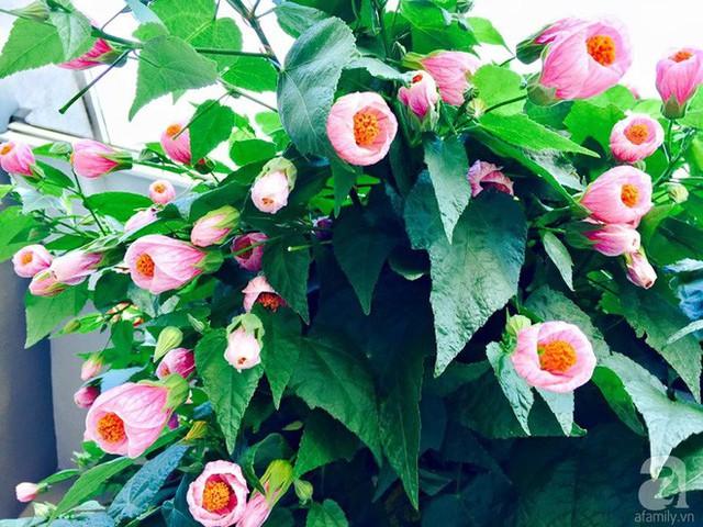 Chị được mọi người khen là rất mát tay khi trồng trọt, làm vườn.