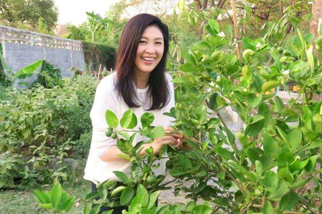 Chia sẻ với báo giới, cựu nữ Thủ tướng ở xứ sở Chùa Vàng nói: Tôi rất hạnh phúc và tự hào về vườn rau của mình.