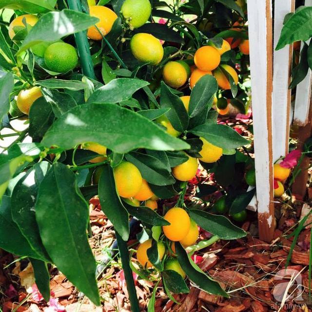 Để có lượng nước đủ tưới cho khu vườn, khi sinh hoạt chị cũng tận dụng nước rửa rau để mang vườn ra tưới cây.