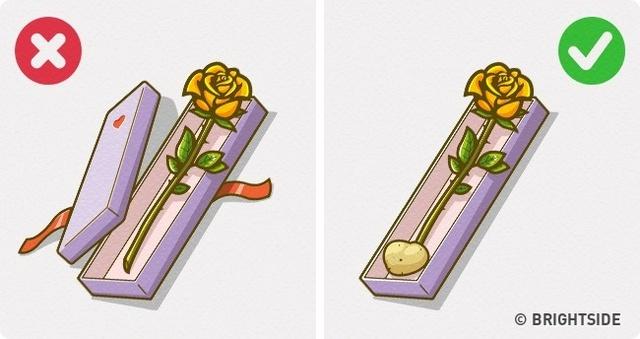 Khoai tây chính là quý nhân cho những bông hoa cần sống lâu ngày (Ảnh: Brightside)