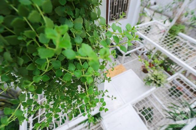 Khéo léo trồng cây xen kẽ.