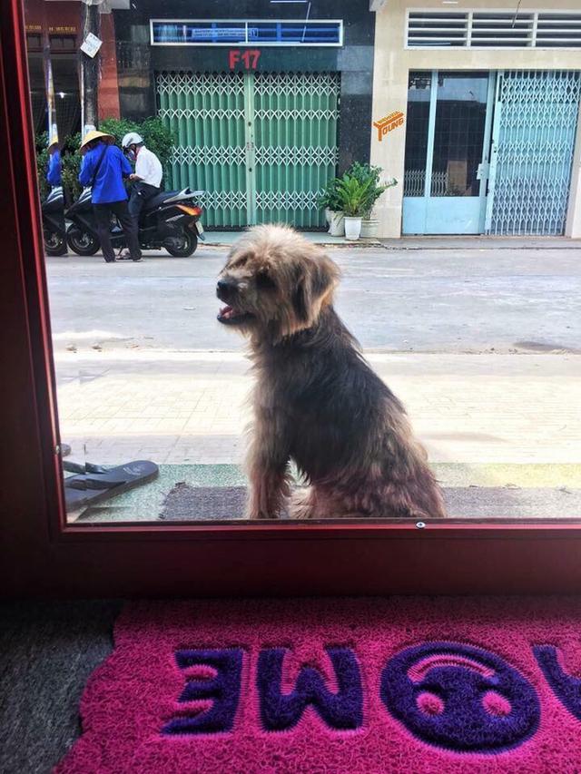 Trưa 19/6, sau ít giờ đăng tải câu chuyện, chủ cũ của em cún đã đến đón em về.