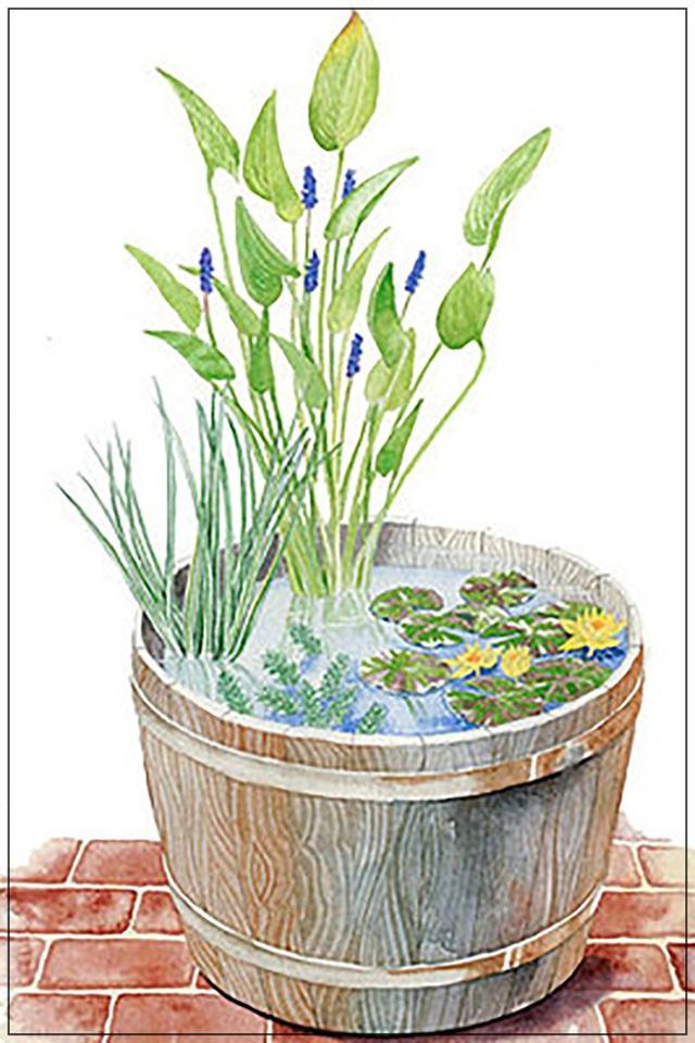 5. Với sân thượng, hiên nhà hay ban công có diện tích nhỏ, bạn có thể tạo một tiểu cảnh xanh tươi với thùng đựng nước. Sưu tầm và trồng các loại cây ưa nước cũng là ý tưởng độc đáo mang không khí trong lành vào nhà.
