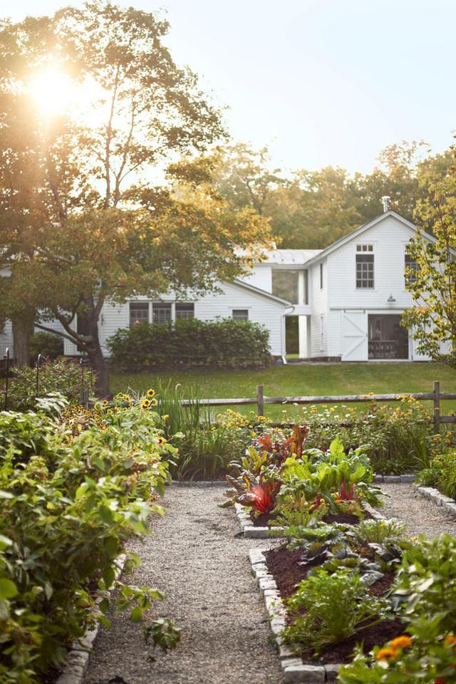 5. Tạo một góc nhỏ trông rau củ quả vừa cung cấp thực phẩm sạch vừa giúp khu vườn phía trước thêm đẹp hơn.