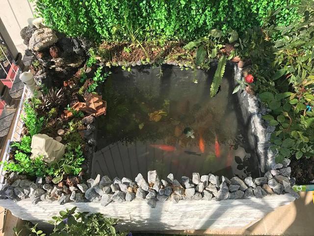 Đàn cá cảnh và rùa trong bể.