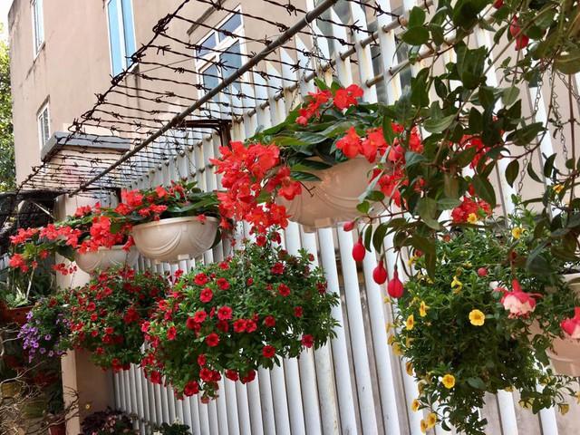 Ngắm loạt ảnh nhà Bích Phương, nhiều người cứ ngỡ như đang lạc vào một vườn hoa đầy sắc màu.