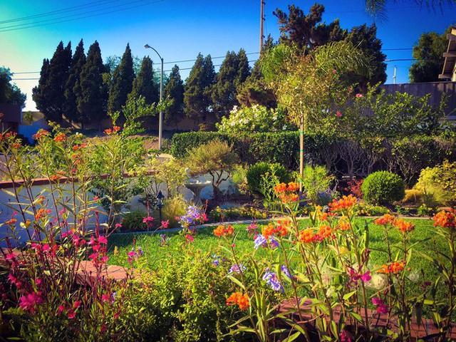 Khu vườn rực rỡ bao quanh ngôi nhà của nữ MC nổi tiếng.