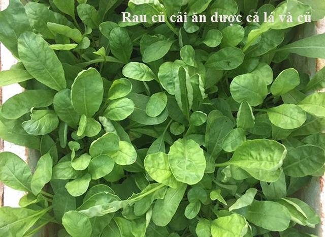 Muốn rau xanh sạch, chị trừ sâu bằng các loại thuốc tự chế, thân thiện với môi trường, không gây độc hại cho cây như nước tỏi ớt gừng, nước ép từ vỏ cam, bưởi…