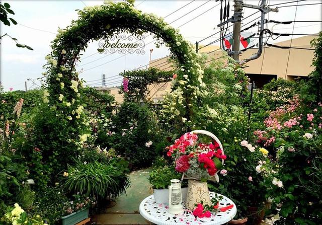 Vườn hồng đẹp như mơ trên sân thượng.