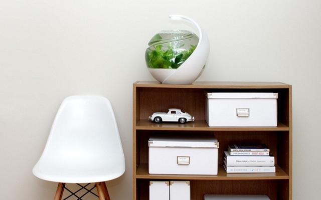 Thiết kế bể cá kết hợp bóng đèn chiếu sáng này được thiết kế riêng cho một bàn làm việc nhỏ.