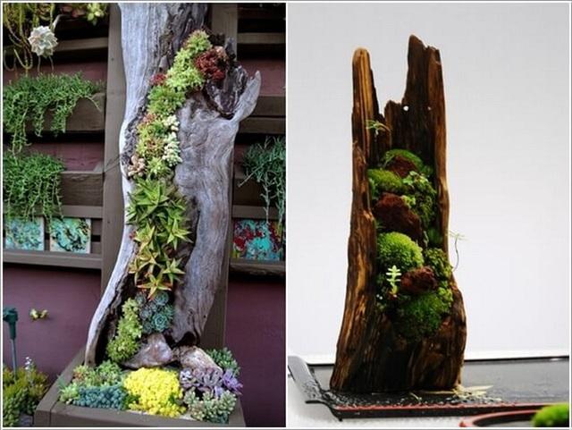 6. Một thân gỗ có thẻ được đục đẽo để trở thành chậu trồng những loại cây thân mọng nước như sen đá, xương rồng.