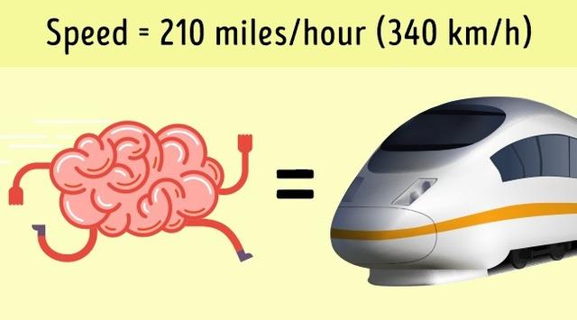 Tốc độ hoạt động của não bộ có thể sánh ngang với tốc độ của những tàu điện nhanh nhất hiện nay.