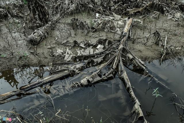 Sau gần một tháng, nước vẫn chưa rút hết nên vẫn chưa thể trồng mới.