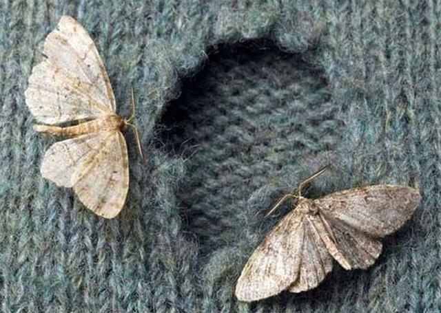 Sự thật là chẳng có con bọ nào cắn quần áo của bạn cả.