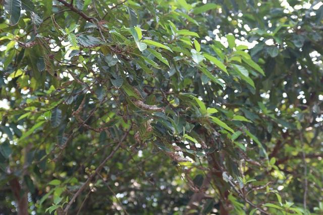 Sau 20 ngày nhưng cây cối ở sân nhà trước khu vực vẫn còn bị cháy xém lá
