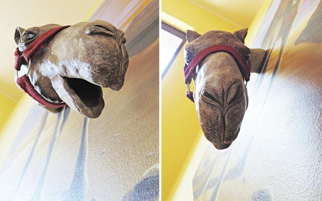 Đầu chú lạc đà thò hẳn ra ngoài có sẽ tạo cảm giác vô cùng ấn tượng.