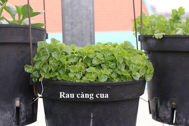 Chị cũng học cách trồng rau qua nhiều loại thùng chứa khác nhau từ thùng xốp, khay nhựa đến những cái thau, chậu, xô bỏ đi. Rau ăn lá như rau muống, rau cải, củ cải Nhật, rau má phù hợp với các thùng xốp to… Các khay nhựa nhỏ dùng để trồng rau thơm, húng quế, hành lá...