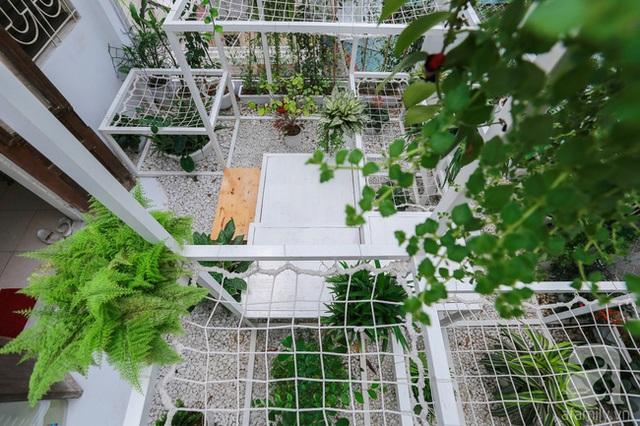 Các loại cây lọc không khí được trồng xen kẽ ở các điểm nối khung thép.