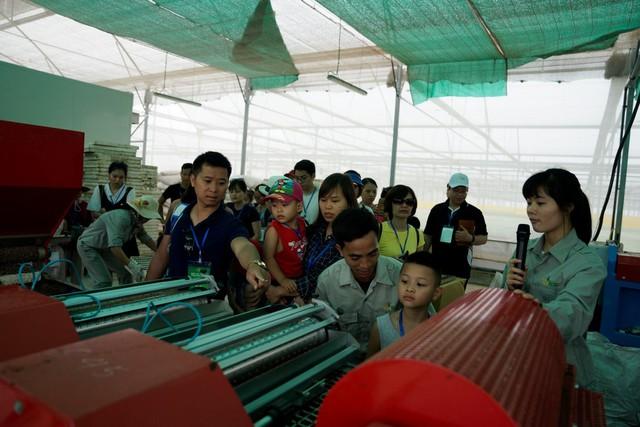 Rau mầm khi trưởng thành đạt chuẩn sẽ được chuyển tới phòng làm khô và thu hoạch bằng máy cắt