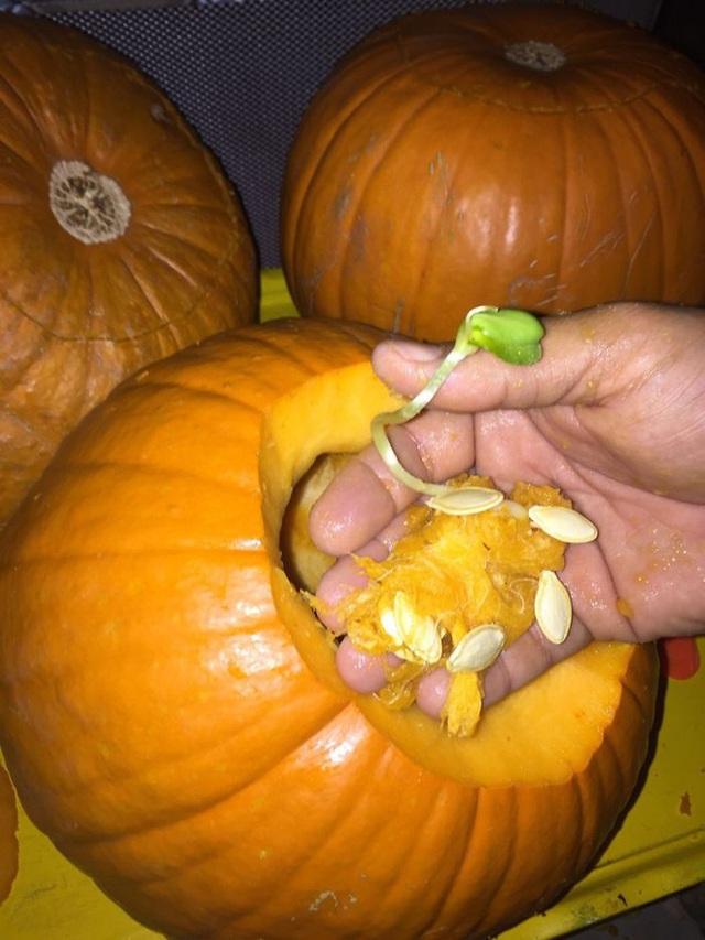 Cà chua thì còn có thể đâm thẳng, xuyên thủng chứ bí đỏ thì đành chấp nhận yên vị trong đó.