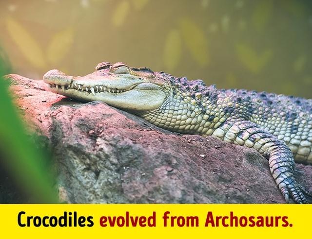 Sự tuyệt chủng hàng loạt tạo cơ hội duy nhất cho loài khủng long Archosaurs phát triển, tổ tiên của loài cá sấu bây giờ.