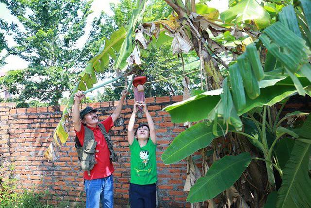 Cậu con trai út cũng cùng bố tận hưởng những niềm vui của người trồng trọt khi được tự tay thu hoạch cây trái cho mỗi bữa ăn.