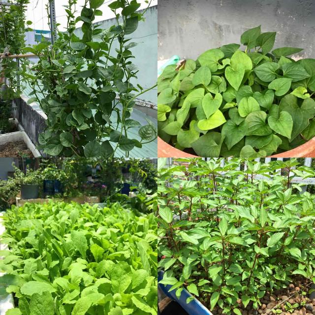 Các loại rau gia vị được trồng trong khu vườn