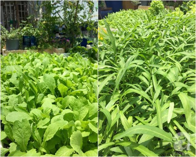 Góc sân thượng trồng rau ăn lá.