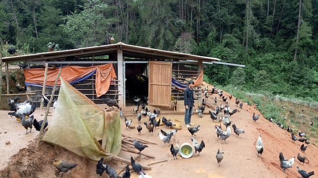 Mỗi ngày anh Công đều quan sát hoạt động của từng con gà một, xem đàn gà có biểu hiện gì bất thường không nhằm chủ động cho việc phòng chống dịch bệnh lớn cho đàn gà